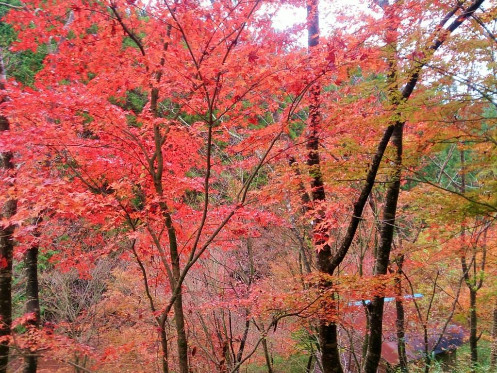 大分の紅葉